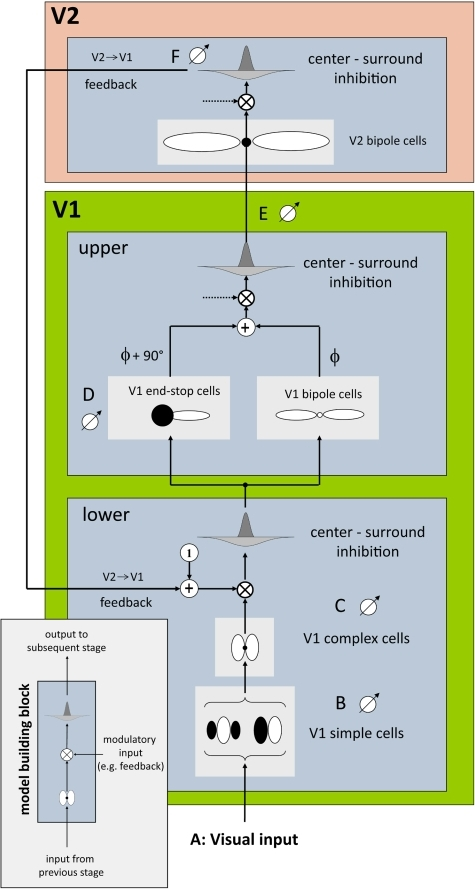 "Our model simulates cells of two areas in the visual cortex, visual areas V1 and V2.Each model (sub-) area is designed with respect to a basic building block scheme (bottom, left). The scheme consists of three subsequent steps, namely filtering, modulation and centre-surround inhibition. This scheme is applied three times in our model architecture (left), corresponding to upper and lower area V1 and area V2. In this model, modulatory input (provided by feedback from area V2) is only used in lower area V1. Otherwise the default modulatory input is set to 1 (which leaves the signal unchanged). The lower part of area V1 is modelled by simple and complex cells for initial contrast extraction. Note, that each cell pool consists of 12 oriented filters equally distributed between 0° and 180°. The upper part of V1 is modelled by end-stop and bipole cells which both receive input from lower V1. The additively combined signals are further passed to area V2 where long-range lateral connections are modelled by V2 bipole cells. Note, that ""•"" stands for a multiplicative connection of filter subfields as employed in V2 whereas ""○"" stands for an additive connection as employed in V1. Finally output of area V2 is used as feedback signal which closes the recurrent loop between areas V1 and V2."