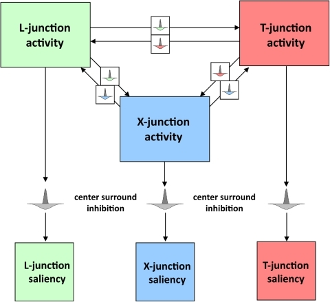 Competition between junction signals.Junction signals can locally compete with each other to avoid ambiguous signals. In addition, centre-surround inhibition helps to suppress multiple junctions in a small neighbourhood which could be induced by fine texture or noise.