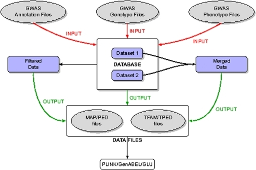 Workflow Chart.This figure shows the data workflow. First the genotypic and phenotypic data are loaded into the database. The data is then exported from the database as standard format files, including a possible filtering and/or merging step. Finally, the output files are further analyzed using third party tools.