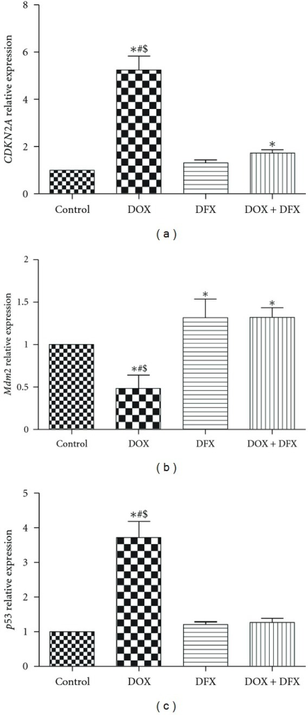Effect of DOX, DFX, and their combination on the expression levels of CDKN2A (a), Mdm2 (b) and p53 (c) in rat heart tissues. Data are presented as mean ± SD (n = 10). *, # and $ indicate significant change from control, DFX and DOX plus DFX, respectively, at P < 0.05.
