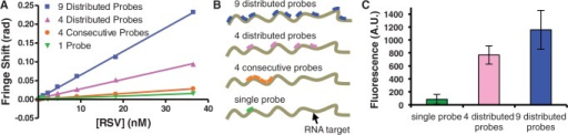 Comparison of the BSI binding response and net hybridization of various numbers and distributions of probes incubated with the RNA target. (A) Increasing the number and distribution of distinct probes improves sensitivity. (B) Illustration of the relative positions of the DNA probes along the RNA target. (C) Hybridization studies confirm that increased number of probes bound correlates with increased binding signal.