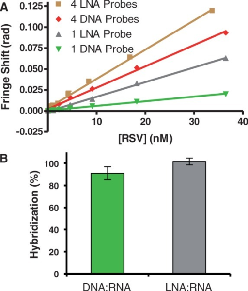 Comparison of the BSI binding response and net hybridization of LNA and DNA probes of the same sequence and length incubated with target RNA. (A) LNA probes improve the BSI signal. (B) DNA:RNA hybrids and LNA:RNA hybrids produce virtually the same net hybridization.