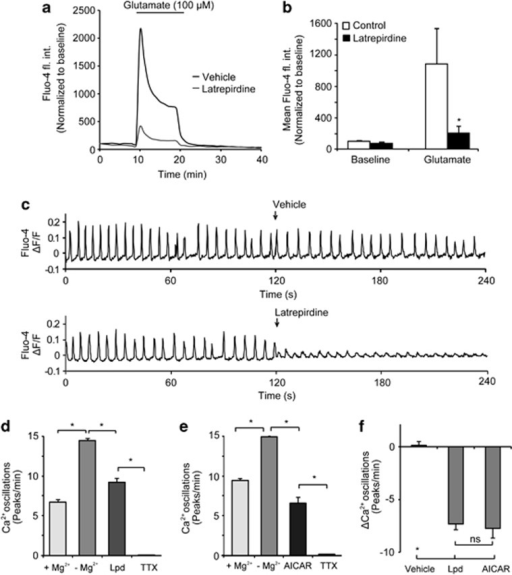 Latrepirdine pretretment attenuates the increase in cytosolic Ca2+ during glutamate excitation and reduces spontaneous Ca2+ oscillations. (a) Average single-cell traces of changes in fluorescence intensity of the cytosolic Ca2+ indicator Fluo-4 AM in response to glutamate excitation. CGNs pretreated with latrepirdine (0.1 nM for 24 h were loaded with Fluo-4 AM (3 μM) and mounted on the confocal microscope stage. Glutamate excitation (glutamate/glycine [100 μM/10 μM] for 10 min immediately followed by addition of MK 801 [2.5 μM]) was induced as indicated. Analysis was carried out using Metamorph software and average pixel intensity per population at each timepoint is shown. (b) Quantification of area under the Fluo-4 AM curve during glutamate excitation in prolonged latrepirdine-pretreated neurons. Vehicle: n=30 cells; latrepirdine: (n=45 cells). Data are shown as mean±s.e.m. *P<0.001 compared with vehicle-pretreated neurons that were glutamate treated. (c) Murine cortical neurons were cultivated on glass bottom dishes, incubated with 5 μM Fluo-4-AM for 45 min at 37 °C, washed, perfused with experimental buffer supplemented with 2 mM MgCl2 and placed on the heated stage of a LSM 5live microscope. Images were taken at 5 Hz, optical slice thickness set to 3.5 μm. The buffer was replaced with MgCl2-free buffer at time 0 and either vehicle or latrepirdine (0.1 nM) was added after 120 s of imaging as indicated. Typical Fluo-4 kinetics are shown as change in fluorescence intensity divided by the mean overall fluorescence intensity (ΔF/F). (d) Quantification of Ca2+ spike frequency after MgCl2 washout, treatment with latrepirdine (0.1 nM, n=176 cells) or (e) AICAR (0.1 mM) (n=88 cells) addition followed by complete block using tetrodotoxin (TTX, 1 μM) (significant difference P<0.05, paired t-test). (f) Quantification of changes of the Ca2+-spiking activity due to addition of latrepirdine, AICAR, or vehicle (Control, n=134 cells, latrepirdine, n=176 cells, AICAR n=88 cells, Kruskal–Wallis and subsequent Mann–Whitney tests showed a significant difference in latrepirdine and AICAR compared with control (*) but no significant difference in latrepirdine compared with AICAR (ns).