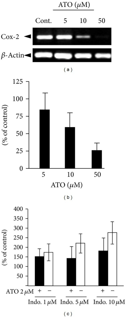 The effects of ATO and Indo and their combinations on the expression of COX-2 mRNA. (a) RT-PCR reaction products were resolved on 1% agarose gel and stained with Ethidium bromide. (b) Densitometric analyses of COX-2 mRNA expression is presented as the band's density to control (β-actin) of three independent experiments (Mean ± SE, n = 3). (c) The effect of Indo alone (light columns) and combination with ATO 2 μM (dark columns) on COX-2 expression.