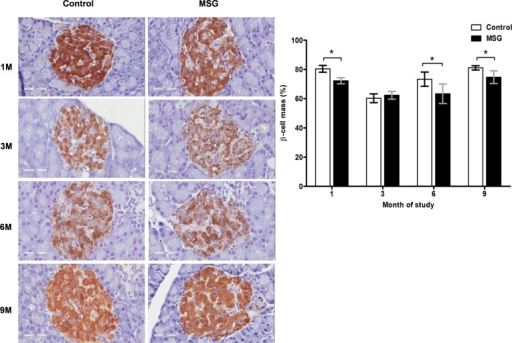 Representative immunohistochemistry (left) and prevalence (right) of insulin staining in control versus MSG-treated groups at 1, 3, 6, and 9 months (x400).* P<0.05.