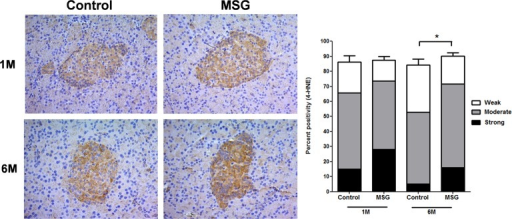 Representative immunohistochemistry (left) and prevalence (right) of 4-HNE staining which was divided into 3 categories (weak, moderate, and strong) based on its intensity in control versus MSG-treated groups at 1 and 6 months (x200).* P = 0.001.