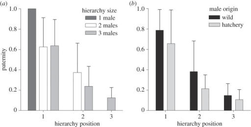Paternity as a function of position in spawning hierarchies in coho salmon. The data (mean±s.d.) are plotted based on (a) total hierarchy size and (b) male origin.