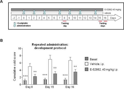 Effect of repeated administration of E-52862 on cold allodynia in a preventive paradigm in OX-induced neuropathy in rats.(A) Experimental preventive protocol. In this case, the administration of E-52862 started two days before the first OX injection. The preventive effect was evaluated on days 8, 15 and 16 after the first injection of OX (testing days). The evaluation on day 16 was performed one day after the last administration of E-52862. (B) Effects of the repeated administration of E-52862 at 40 mg/kg (grey bars) in the preventive protocol on cold allodynia evaluated as cumulative cold score. Each point and vertical line represents the mean ± S.E.M. of the values obtained from 10 animals per group. **p < 0.01; ***p < 0.001 vs. vehicle group (one-way ANOVA followed by Newman–Keuls test).