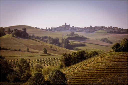 Landscape of Langhe (courtesy of Marcello Marengo, University of Gastronomic Sciences, Pollenzo, Italy)