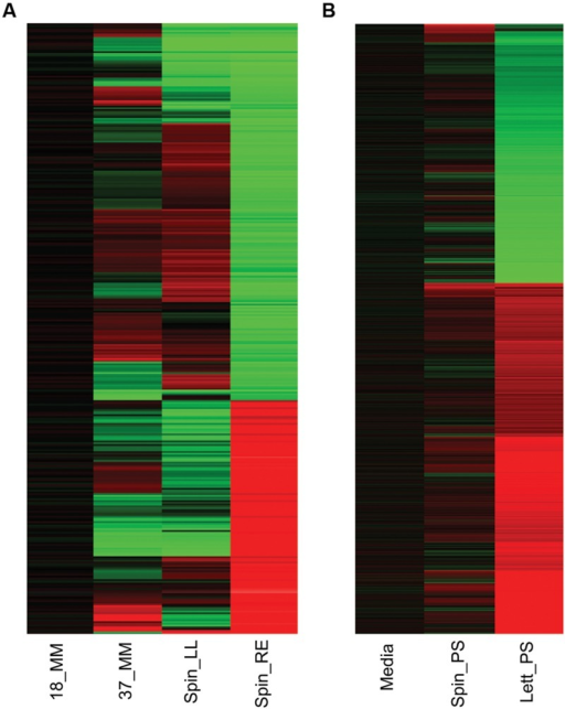 Gene expression overview. Heatmap of Escherichia coli O157:H7 (Sakai) total gene expression changes in response to different temperature and plant extract treatments. Changes in gene expression for E. coli O157:H7 (Sakai) grown for 1 h at 18°C are compared to cultures grown similarly at 37°C (37_MM), or at 18°C containing spinach (S. olercera) extracts of leaf lysates (Spin_LL) or root exudates (Spin_RE; A). Changes in gene expression for exposure to 1 h exposure to medium at 18°C containing polysaccharide extracts from spinach (S. olercera; Spin_PS) or lettuce (Lactuca sativa; Lett_PS) are compared to a baseline for E. coli O157:H7 (Sakai) in medium containing a no-plant control extract ('Media'; B). Significant changes in expression of at least twofold are shown for induced (red) or repressed (green) genes.