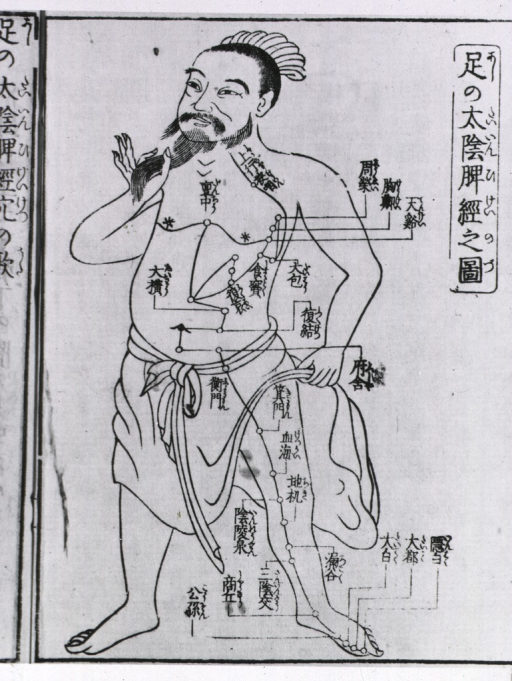 <p>Standing Oriental figure, full length, stroking beard, acupuncture points and meridians illustratrated with Japanese characters.</p>