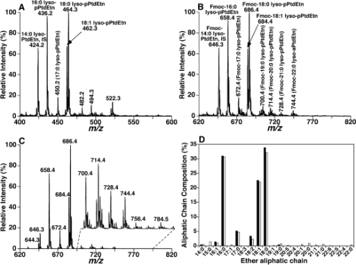 "Quantitative analyses of ether lysoPtdEtn produced by alkaline hydrolysis of fatty acyl esters in bovine heart PtdEtn.Bovine heart PtdEtn solution was treated with LiOMe leading to the cleavage of the FA ester bonds in the PtdEtn pool as previously described [26]. The resultant lysoPtdEtn mixture containing an ether aliphatic chain at the sn-1 position of glycerol was recovered using a modified procedure of Bligh and Dyer [21]. The mass spectrum in panel A was acquired in the negative-ion mode by using a QqQ mass spectrometer directly from the lysoPtdEtn solution that was diluted to less than 50 pmol of total lipids/µl. The mass spectrum in panel B was acquired in the negative-ion mode directly from a diluted lysoPtdEtn solution after addition of Fmoc chloride as previously described [16]. The mass spectrum in panel C was acquired in the negative-ion mode as that of spectrum B but in the neutral loss mode. The neutral loss scanning was conducted through coordinately scanning the first and third quadrupoles with a mass difference of 222.2 u (i.e., loss of a Fmoc) while the collisional activation was performed in the second quadrupole at collision energy of 32 eV. ""IS"" denotes internal standard. Panel D shows the comparison of ether aliphatic chain profiles in bovine heart PtdEtn determined by using different approaches: (1) direct quantitation of the resultant ether lysoPtdEtn molecular species from alkaline hydrolysis of PtdEtn (closed column) through a two-step quantitation procedure [5] from spectra A and C and (2) calculated composition (open column) derived from individual PtdEtn molecular species listed in Table 1."