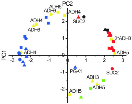 Matrix-augmented PCA for wild-type, HXT-HXT7 and HXT-TM6* yeast. Data matrices from the respective strains were catenated to a single matrix, followed by PCA. The following colors and symbols are used: Glucose-induced genes (blue), glucose-repressed genes (red), ADH3-6 (yellow), HSP12 (black), CYC1 (green), wild-type (circles), HXT-HXT7 (squares) and HXT-TM6* (triangles).