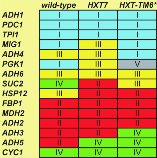 Summary of gene classification. Genes are arranged into five groups after PCA: group I (genes induced upon glucose addition), group II (genes repressed upon glucose addition), group III (genes with expression profiles that passes through a maximum), group IV (genes with expression profiles that passes through a minimum) and group V (no regulation). PCA classification was confirmed by hierarchical clustering and Kohonen SOM.