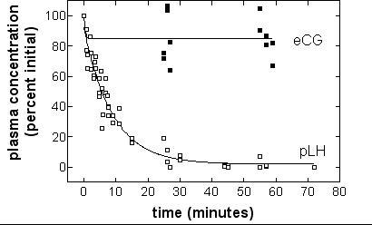 Half-life of porcine LH and equine CG in rats by ELISA. Halothane-anaesthetized rats aged 52 days, received 20 μg pLH or eCG in the tail vein. Blood was withdrawn on heparin from the jugular vein. Hormone concentrations were measured by ELISA. Half-life of pLH was determined by non-linear regression of concentrations as a function of time.