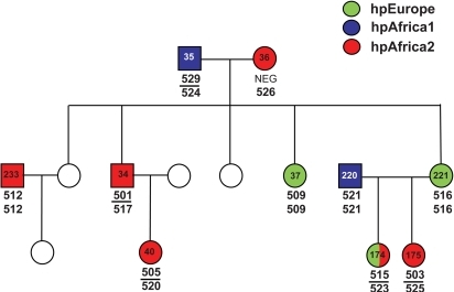 Helicobacter pylori in family 13 from South Africa.See legend of Figure 1 for details.