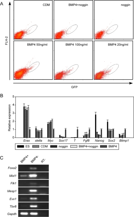 Induction of PGCs by BMP4 in the CDM.(A) Flow cytometric analysis of stella-GFP expression in day 4 EBs in the CDM or supplemented with BMP4, noggin or BMP4+ noggin. (B) Gene-expression analysis of PGC markers in GFP positive cells in (A). The relative expression of each gene in differentiated cultures was normalized by its expression in GFP-positive cells in the CDM with BMP4 after normalization with Gapdh. (C). Gene-expression analysis in GFP-positive (BMP4+) and GFP-negative (BMP4−) cells in day 4 EBs in the CDM with BMP4. Foxa2 is a mesoendoderm marker, whereas Mixl1, Flk1, Mesp1, Evx1 and Tbx6 are mesoderm markers [24], [25]. Gapdh served as loading control.
