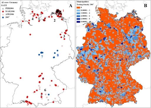 Results of the HPAIV H5N1 monitoring.Regions with cases of HPAIV H5N1 infection in wild birds in Germany (A). Spatial distribution of the wild bird monitoring in German municipalities 2007 (samples per square kilometer) (B). After the initial outbreak on the Isle of Ruegen (1), only three cases were recorded in inland municipalities at the coastline of Mecklenburg-Western Pomerania (2). Most of the cases in the neighboring states of Brandenburg (3) and Schleswig–Holstein (4) were reported several weeks afterwards in March and April 2006. HPAIV H5N1 cases at Lake Constance (5) were connected to further spread in smaller wetland areas in Bavaria (6). The massive outbreak in 2007 at the Helme reservoir at Berga-Kelbra (7) was related to four cases eastward in Saxony (8).