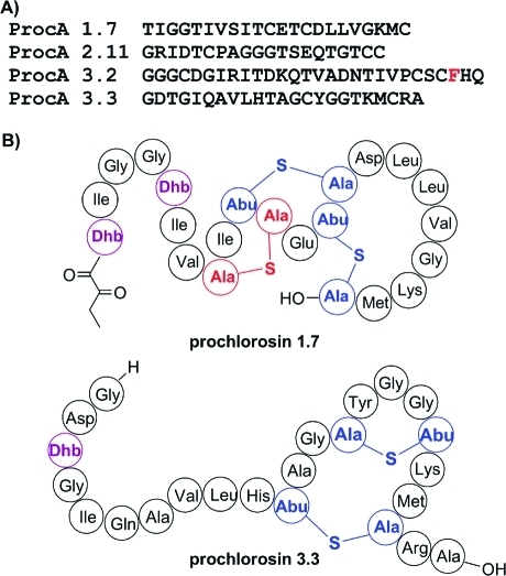 (A) Sequences of the ProcA lantipeptide core peptides used in this study. The residue replaced by pBpa in this work is highlighted in red. For the sequences of the leader peptides, see Figure S1. (B) Representative structures of prochlorosins 1.7 and 3.3. Abu, 2-aminobutyric acid; Dha, dehydroalanine; Dhb, dehydrobutyrine.