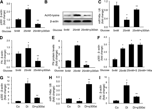 miR-146a levels are regulated with p300. In the endothelial cells, 25 mmol/L (25 mM) glucose-induced p300 mRNA upregulation (A) and increased histone acetylation (B) were prevented by p300 shRNA (p300sh) transfection. In the endothelial cells, p300 shRNA also prevented glucose-induced reduced miR-146a production (C) and FN mRNA (D) and FN protein upregulation (E) in the HUVECs. In parallel, diabetes-induced retinal p300 upregulation (G), miR-146a downregulation (H), and FN upregulation (I) were prevented by intravitreal p300 siRNA (p300si) injection. F: No significant differences were seen with respect to p300 mRNA expression when cells in 25 mmol/L glucose were transfected with miR-146a mimic or scrambled (S) mimic. *Significantly different from 5 mmol/L glucose or control (Co); **significantly different from 25 mmol/L glucose or diabetes (Di). miRNA levels are expressed as a ratio of RNU6B (U6); mRNA levels are expressed as a ratio to β-actin normalized to control or 5 mmol/L (5 mM) glucose.