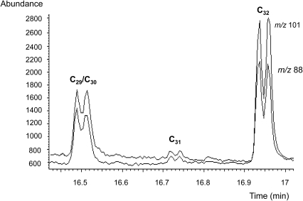 Thermochemolytic-gas chromatography-electron impact/mass spectrometry (THM-GC-EI/MS) of purified phthiocerol dimycocerosate (PDIM) waxes.The selected ion monitored EI/MS chromatogram shows the target fragment ions m/z 101 and m/z 88, resulting from the major trimethyl C29 and tetramethyl C30, and C32 mycocerosates released by thermochemolysis of the PDIMs. A minor proportion of a tetramethyl C31 mycocerosate is also indicated. The characteristic doublet peaks are due to racemisation during the alkaline hydrolysis. The method relied on recognizing comparable proportions of the combined C29/C30 peak and the C32 peak, as was the case in all the positive specimens. Some minor variation in the ratios of the individual peaks was observed, but this did not affect the diagnostic ratios.
