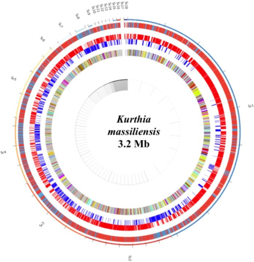 Graphical circular map of Kurthia massiliensis genome. From outside to the center: Genes on both strands, genes on foward strand, genes on reverse strand and genes colored by COG categories.
