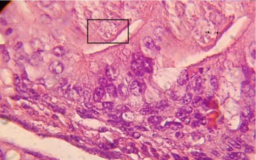 lavender oil cat urine