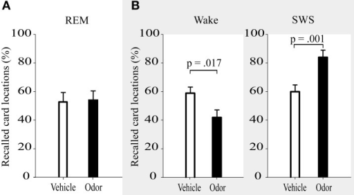 Recall of card locations (%) was not differentially affected by interference learning after reactivation in REM sleep (A), but showed impairments after reactivation during wakefulness and enhanced resistance toward interference after reactivation in SWS (B, data adapted from Diekelmann et al., 2011). Values are means ± s.e.m.