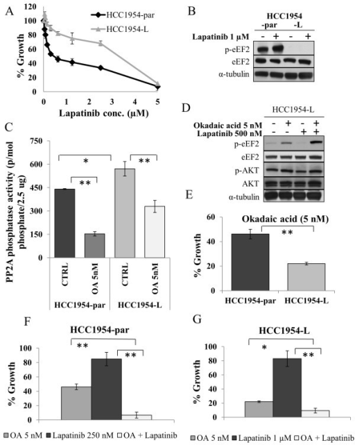 PP2A regulates eEF2 phosphorylation in an additional cell line model of acquired lapatinib resistance. (A) Effect of lapatinib on growth of HCC1954-par and HCC1954-L cells. (B) Immunoblot analysis of total and phosphorylated eEF2(Thr56) in HCC1954-par and HCC1954-L cells following 24 hr lapatinib treatment. (C) Activity of PP2A in HCC1954-par and HCC1954-L cells, untreated and treated with 5 nM OA for 24 hr. (D) Immunoblot examining the effect of okadaic acid (OA) alone and in combination with lapatinib on levels of total and phosphorylated eEF2(Thr56) and AKT(Ser473). (E) Effect of 5 nM OA on growth of SKBR3-par and SKBR3-L cells. (F) Effect of OA alone and in combination with lapatinib on the growth of HCC1954-par cells and (G) HCC1954-L cells. *denotes p ≤ 0.05, **denotes p ≤ 0.01. Error bars represent the mean ± SD (n = 3).