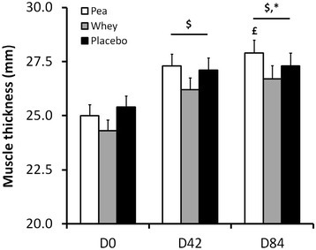 Changes in biceps brachii thickness (mm) during the experimental protocol. $: Significant difference within each group compared with D0 (P < 0.0001). £: Tending towards significance compared with D42 for the Pea group only (P = 0.09). *: Between group comparison between D0 and D84 approaching significance (P = 0.09).