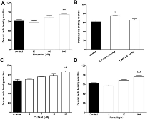 RhoA and Rho kinase inhibitors promote initiation of neurites.(A) The percentage of cells bearing a neurite was significantly increased at 500 μM of Ibuprofen whereas 10 μM and 100 μM led to no difference to control conditions (3–7 independent experiments, 744 to 2358 neurites measured). (B) Application of cAMP did not change the number of cells bearing a neurite, however neurite lengths were increased to a similar amount compared to Ibuprofen (5 independent experiments, 1151 to 1775 neurites measured). (C) Blocking Rho kinases with increasing levels of Y-27632 resulted in a trend to more cells bearing a neurite. A highly significant effect was observed at 50 μM (3 independent experiments, 732 to 973 neurites measured). (D) Blocking Rho kinases with elevated levels of Fasudil (100 μM) resulted in a highly significant increase in neurite bearing cells (3 independent experiments, 1857 to 3422 neurites measured). **p<0.01 and *p<0.05 against control by Kruskal-Wallis test.
