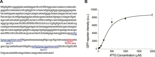 The promoter GlacSpr is repressed by LacI and inducedby IPTG.(A) The sequence of GlacSpr. (B)The dose–response curve of GlacSpr. Thetranscriptional activity of GlacSpr in the OFF state is alittle higher than GAL1pr in glucose, as the result,GlacSpr is not tight enough to completely shut off thecyclin activity of the wild-type Cln3. The cln3Δbck2Δ cells carrying GlacSpr-CLN3 areviable in the absence of IPTG with prolonged G1 phase.DOI:http://dx.doi.org/10.7554/eLife.03977.005