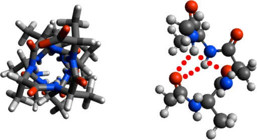 "Orthogonal views of ball-and-stick model of ""dynamic"" helix of 12-residue capped oligoalanine with two three-centered hydrogen bonds indicated (red dots)."