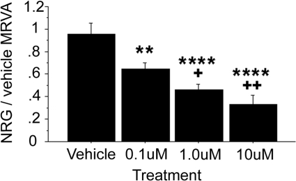 The selective erbB2 antagonist AG825 dampens the NRG1α-induced MRVA.Administration of AG825 in DMSO vehicle (n = 5) caused a robust, dose-dependent decrease in the MRVA induced by NRG1α. Compared with the vehicle control, ** represents p<0.01 and **** represents p<0.0001. Compared with the low dose, + represents p<0.05 and +++ represents p<0.001.