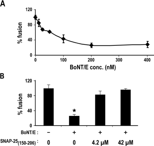 BoNT/E inhibits early endosomal fusion in a SNAP-25(150–206)–dependent manner. (A) BoNT/E dose dependently and saturably inhibited early endosome fusion. (B) The inhibition of early endosome fusion by BoNT/E is reversed by addition of SNAP-25(150–206) supporting a role for SNAP-25 in endosome fusion.