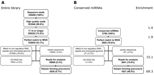 Summary of the filtering process to identify candidate miRNA sequences in the library. See text for details about each filtering process. Numbers in each box represent the read numbers and numbers in parenthesis are frequency calculated as the percentage of reads retained (or discarded) after each step of processing compared to the total number of reads. Enrichment is calculated as the percentage of conserved miRNA reads in the number of library reads retained after each step of processing.