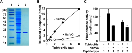 TpbA has phosphatase activity against tyrosine residues.Purification of TpbA-cHis (lane 1: protein marker, lane 2: whole cell lysate from E. coli BL21(DE3)/pET28b-13660c after 3 h of IPTG induction, lane 3: purified TpbA-cHis) (A). p-Nitrophenyl phosphate phosphatase assay with TpbA-cHis protein (B). Phosphatase reaction was performed at 37°C for 1 h with the indicated amount of protein. Na3VO4 (10 mM) was used as an inhibitor specific for tyrosine phosphatases. Protein tyrosine phosphatase assay with TpbA-cHis (C). Phosphatase reaction was performed with synthetic phosphotyrosine peptides (type I: END(pY)INASL and type II: DADE(pY)LIPQQG) at 37°C for 3 h. Na3VO4 (50 mM) was used as an inhibitor.