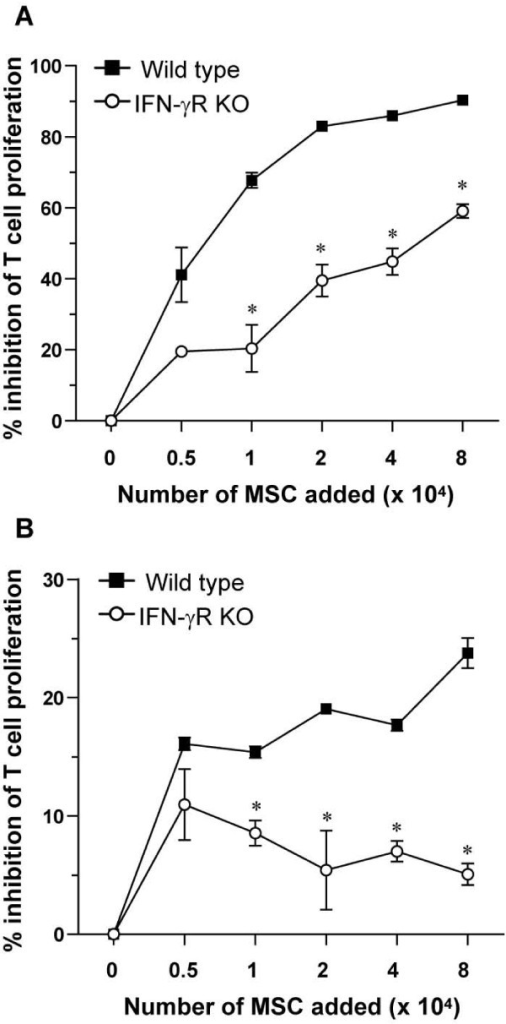 Mesenchymal stem cells (MSCs) inhibit the anti-CD3-induced proliferation of CD4+ T cells in vitro. (a) CD4+ T cells (5 × 104 cells) and accessory cells (5 × 104 cells) were incubated with 3 μg/ml anti-CD3 antibody and the indicated numbers of mitomycin c-treated wild-type or interferon-gamma receptor knockout (IFN-γR KO) MSCs for 72 hours and pulsed for the last 16 hours with 1 μCi of [3H]TdR. The percentage inhibition (100 × [(radioactivity in cultures without MSCs -- radioactivity in cultures with MSCs)/radioactivity in cultures without MSCs]) by increasing numbers of MSCs is shown. Each result represents the mean of four cultures ± standard error of the mean (SEM). Results are representative of two independent experiments. * P < 0.05 for comparison with wild-type MSCs (Mann-Whitney U test). (b) Carboxyfluorescein succinimidyl ester (CFSE)-labeled CD4+ T cells (5 × 104 cells) and accessory cells (5 × 104 cells) were incubated with 3 μg/ml anti-CD3 antibody and the indicated numbers of mitomycin c-treated wild-type or IFN-γR KO MSCs for 72 hours. The proliferation of CD4+ T cells was analyzed by detection of CFSE dilution by flow cytometry. The percentage inhibition (100 × [(percentage of proliferating CD4+ cells not treated with MSCs -- percentage of proliferating CD4+ cells treated with MSCs)/percentage of proliferating CD4+ cells not treated with MSCs]) by increasing numbers of MSCs is shown. Each result represents the mean of three cultures ± SEM. Results are representative of two independent experiments. * P < 0.05 for comparison with wild-type MSCs (Mann-Whitney U test).