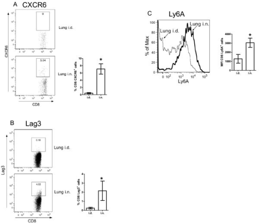 CXCR6 expression on CD8 T cells from lungs of Ad85A immunized mice. BALB/c mice were immunized i.d. or i.n. with Ad85A. At 3 weeks post-immunization, lung lymphocytes were isolated and the percentage of CD8 T cells expressing CXCR6 was determined by flow cytometry. (A) Representative FACS plots of CD8+ gated cells showing CD8+CXCR6+ cells in lungs of i.d. and i.n. immunized mice. The bar chart shows the mean ± SEM from 3 independent experiments with 3 mice per group. (B) Representative FACS plots of CD8+ gated cells showing CD8+Lag3+ cells in lungs of i.d. and i.n. immunized mice 8-12 weeks previously. The bar chart shows the mean ± SEM of 3 i.d. and 5 i.n. immunized mice. (C) A representative histogram showing the expression of Ly6a on lung CD8 T cells. The bar chart shows the mean fluorescence intensity (MFI) ± SEM of 3 i.d. and 5 i.n. immunized mice. * indicates p < 0.05 by Mann-Whitney test.