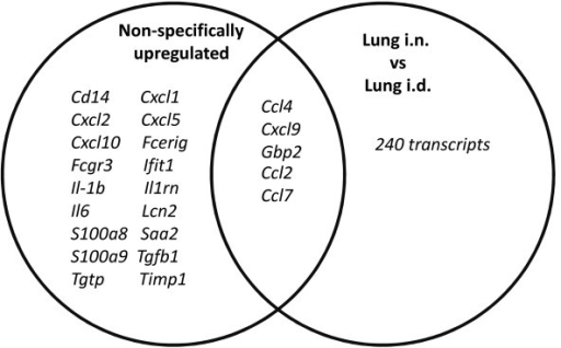 The overlap of genes differentially expressed between lung i.n. and lung i.d., with genes reported to be related to a common lung inflammatory response. Venn diagram showing the overlap between genes more highly expressed by lung i.n. than i.d. cells, with genes reported as upregulated in lung inflammation [31].