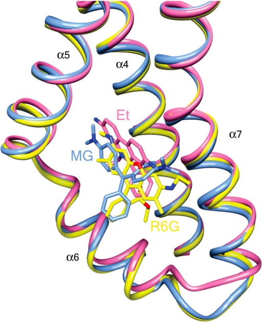Convergent QacR mutant E90Q and wild type QacR drug-binding sites.Superimposition of the structures of the multidrug-binding pockets of wild type QacR-malachite green (MG; light blue ribbon), QacR(E90Q)-ethidium (Et; pink ribbon), and QacR(E90Q)-rhodamine 6G (R6G; yellow ribbon) structures. Helices containing drug-interacting residues are labelled in black.