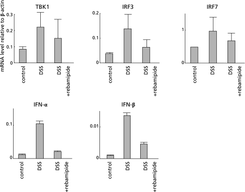Rebamipide suppressed TBK1-IRF3/7-IFN-α/β signaling pathway in DSS mice. Effect of rebamipide on TLR-TBK1 signaling pathway in colon specimens from mice given oral DDS examined by real-time RT-PCR of TBK1, IRF3, IRF7, IFN-α and IFN-β. Messenger RNA expression of these genes was increased because of colonic inflammation in DSS mice, but this increase was suppressed in DSS mice given daily rectal rebamipide.