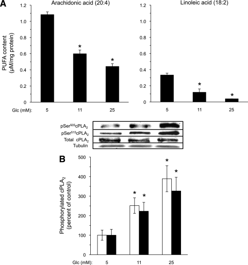 Effect of high glucose on AA and LA content in INS-1E cells. A: INS-1E cells were incubated with the indicated glucose (Glc) levels for 16 h and processed for analysis of fatty acid residues in membrane phospholipids. The absolute content of AA and LA in phospholipids of INS-1E cells exposed to 5, 11, and 25 mmol/L glucose was calculated as follows: , where ASTD is the area of the standard reference of the fatty acid from the calibration run, CSTD is the concentration of the standard reference from the calibration run, Ax is the area of the compound (x) from the calibration run, Cx is the concentration of the compound (x) from the calibration run, Fx is the conversion factor of the compound (x), CGC is the concentration of the compound in the sample from the GC trial run, AGC is the area of the compound (x) obtained from the GC trial run, and MWx is the molecular weight of the compound (x). Results are mean ± SEM, n = 4. *P < 0.05 for the difference from the respective 5 mmol/L glucose values. B: Lysates were prepared from similarly treated INS-1E cells and taken for Western blot analysis of total cPLA2, pSer505-cPLA2 (white bars), and pSer515-cPLA2 (black bars). Representative Western blots are shown (inset). Tubulin was used for equal protein loading control. Results are mean ± SEM, n = 3. *P < 0.05 for the difference from the respective 5 mmol/L glucose control.