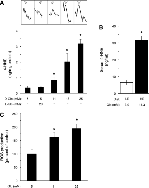 Effect of high glucose on PUFA peroxidation in β-cells. A: INS-1E cells were exposed to the indicated d-glucose (D-Glc) and l-glucose (L-Glc) concentrations for 48 h; during the last 16 h, the cells were incubated with serum-free culture medium with the same additions. The media (10 mL) were then collected, extracted, and analyzed by HPLC. Data are given as nanogram 4-HNE per milligram cellular protein. Representative HPLC tracings are depicted (inset) and the arrows point to 4-HNE peaks. Results are mean ± SEM, n = 3–4. *P < 0.05 for the difference from the 5 mmol/L glucose controls. B: P. obesus gerbils fed LE or HE diet were killed, and sera were collected for glucose and 4-HNE determinations, as described in research design and methods. Serum glucose levels were 3.9 ± 0.1 (LE group) and 14.3 ± 0.7* mmol/L (HE group). Results are mean ± SEM, n = 5–12 animals. *P < 0.05 for the differences from the LE-diet control group. C: ROS production in INS-1E cells incubated for 16 h with the indicated glucose levels was determined by the carboxy-DCF-fluorescence method. Results are mean ± SEM, n = 3–4. *P < 0.05 for the difference from the 5 mmol/L glucose controls.