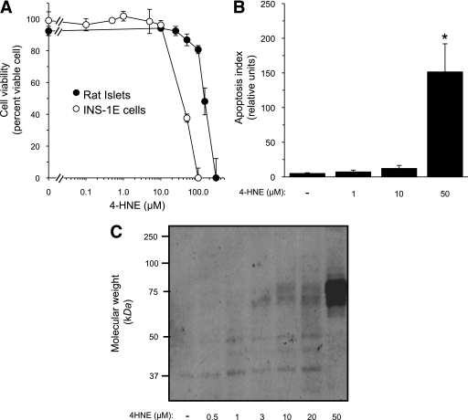 High 4-HNE concentrations compromise β-cell survival. A: Rat islets and INS-1E cells were incubated for 48 or 24 h, respectively, with increasing concentrations of 4-HNE. Islets were pooled from three animals and divided into 10–12 islets per group. After incubation, islet cells were dispersed by mild trypsin digestion. Cell viability was determined at the end of the incubation by the trypan blue exclusion test. Cell viability in the absence of 4-HNE was >95% in both preparations. Results are mean ± SEM, n = 3. *P < 0.05 for the difference from untreated cells. B: INS-1E cells were taken for the FLICA apoptosis assay, as described in research design and methods. Results are mean ± SEM of the relative apoptotic levels in three different slides. C: Western blot analysis of 4-HNE–protein adducts in lysates prepared from INS-1E cells incubated for 48 h at 11 mmol/L glucose and the indicated concentrations of 4-HNE.