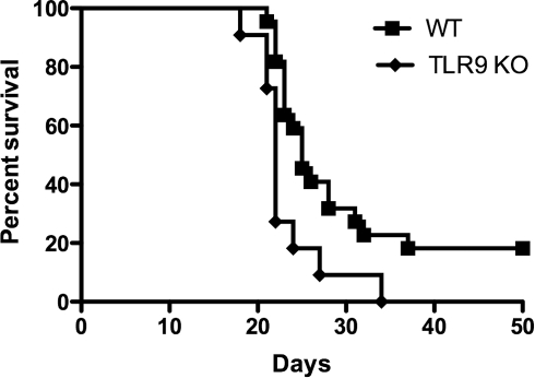 Survival of C57BL/6 wild-type and TLR9 knockout mice following infection with C. neoformans.Mice were infected i.n. with 2×104 C. neoformans organisms and were monitored for signs of disease and euthanized when the signs of disease were severe. TLR9 knockout (n = 11) mice had a significantly different survival curve compared to wild-type mice (n = 22), P<0.01. Data are combined from two independent experiments with similar results.