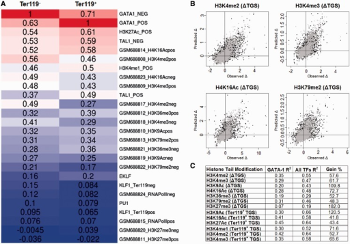 Association of GATA-1 occupancy with specific epigenetic events. (A) Heatmap showing the pairwise Pearson correlations between GATA-1 TGS and epigenetic mark TGSs in Ter119− and Ter119+ erythroid cells. (B) Scatterplots of observed and RF regression predicted values of selected histone mark variation between Ter119− and Ter119+ cells. Black dots represent the predicted values of the GATA-1 trained model, whereas gray dots represent the values predicted by the GATA-1/TAL1/KLF1 trained model. (C) Percentage of variation explained (R2) by the GATA-1 (first column) and GATA-1/TAL1/KLF1 (second column) trained RF regression models. Third column refers the percentage of the increase in R2 values between the two models.