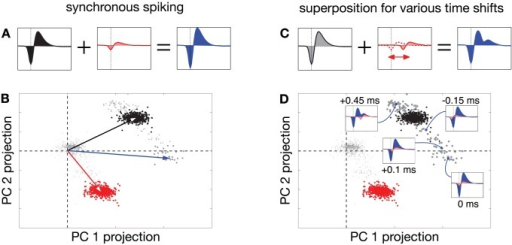 Geometric picture of failures in clustering-based spike sorting, with multi-electrode retinal data [29].(A) Synchronous spike waveforms on a single extracellular electrode from two different neurons (black and red), which sum linearly to form a new waveform (blue) when these neurons fire synchronously. (B) Spike waveforms from these same two neurons projected into a two-dimensional linear feature space. Each point in this space corresponds to a single recorded waveform. Black and red vectors indicate the waveforms shown in (A), and the corresponding clusters of colored points around each vector indicate the samples that were assigned to each neuron. Synchronous spikes from these two neurons give rise to voltage waveforms that lie near the sum of these two vectors (blue vector), and these points (gray) are generally discarded as outliers. (C–D) More generally, overlapping spikes with different temporal offsets produce different waveforms (example, with second waveform offset −0.45 ms relative to first, shown in (C). These summed waveforms lie along a trajectory in the feature space, parameterized by their temporal offset. Several examples (blue points) are shown in (D), along with their associated waveforms.