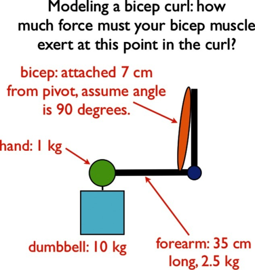 diagram of a human arm lifting a dumbbell in a bicep cu open i