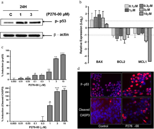 Cytotoxic nature of P276-00 is due to phosphorylation of P53 in FaDu cells. (a) Western blot analysis of phosphorylated-P53 in FaDu cells treated with 1 and 3 μM P276-00 for the 24 hours. (b) Dose dependent relative mRNA expression of downstream target of P53 after 24 hours of treatment. Data in histograms represented on log2 scale as mean ± S.E.M. (n = 3). (c-d) Dose dependent treatment of P276-00 (8 different concentrations -range 0.03 to 10 μM) for 24 hours has shown induction of P53 phosphorylation at Ser392 and cleavage of CASP3 in FaDu cells detected by Automated fluorescence imaging (HCS reader) (c) Graphical representation of the data (d) Representative images.
